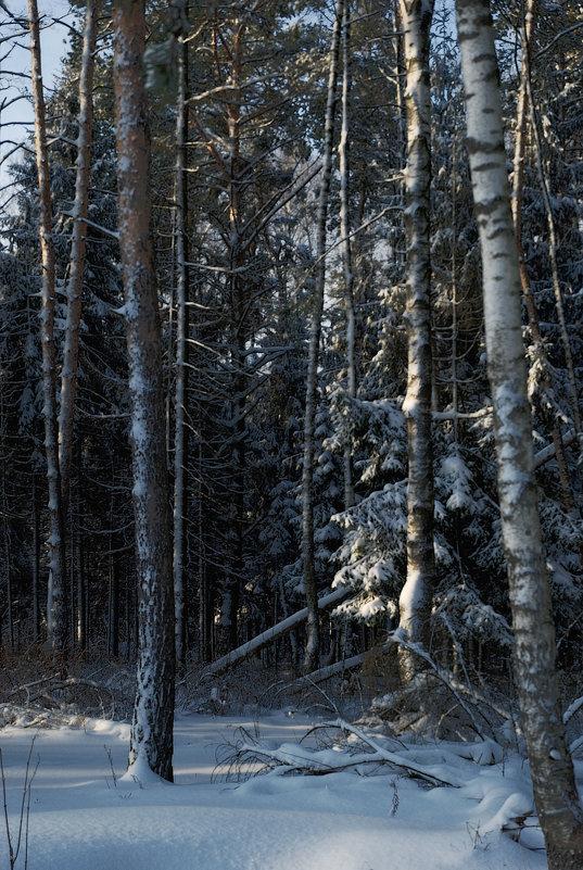 Под белым покрывалом января - sergej-smv