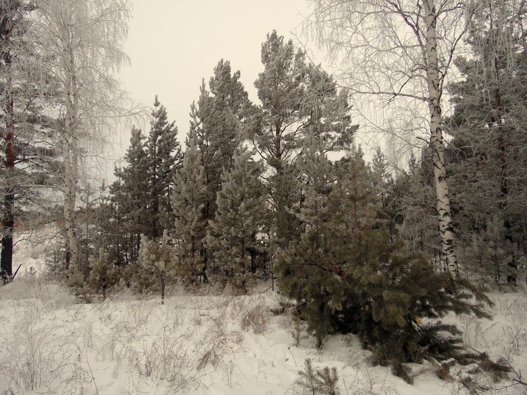Зимняя тишина. - nadyasilyuk Вознюк