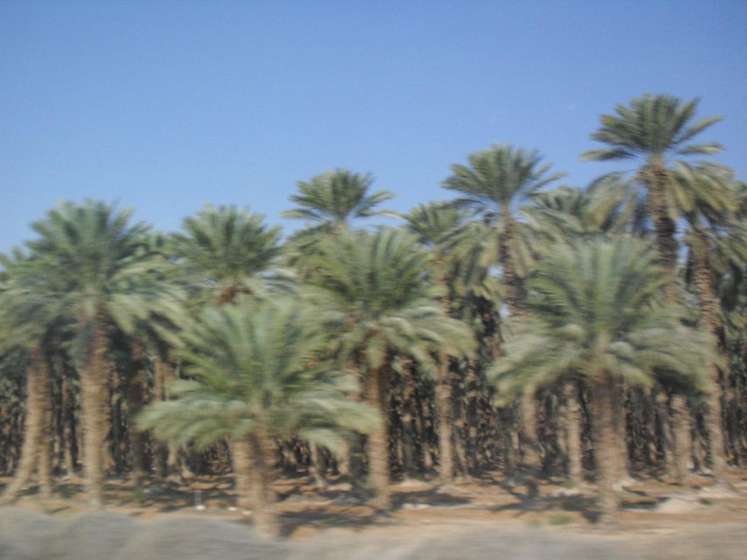 Дорога на Мёртвое море - Надежда