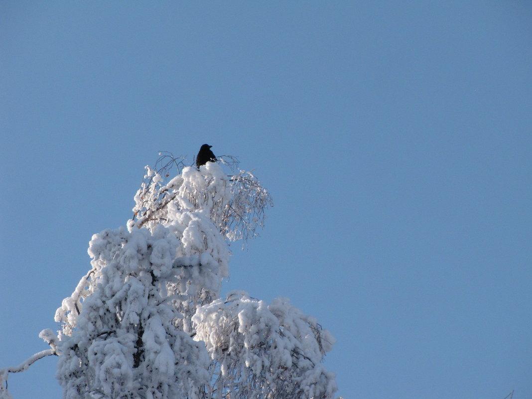 Снежное гнездо - Ольга Иргит