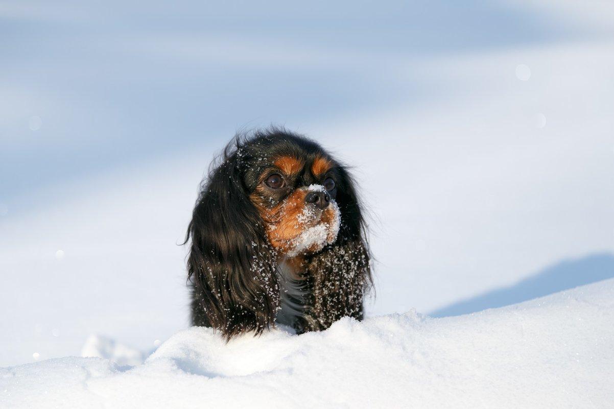 Собака - Алексей