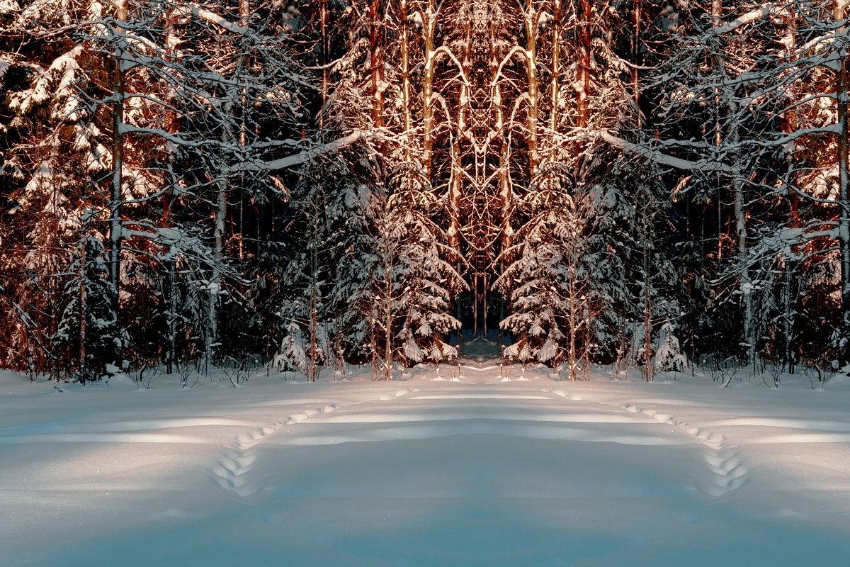 Закат в лесу. - Валерий Молоток