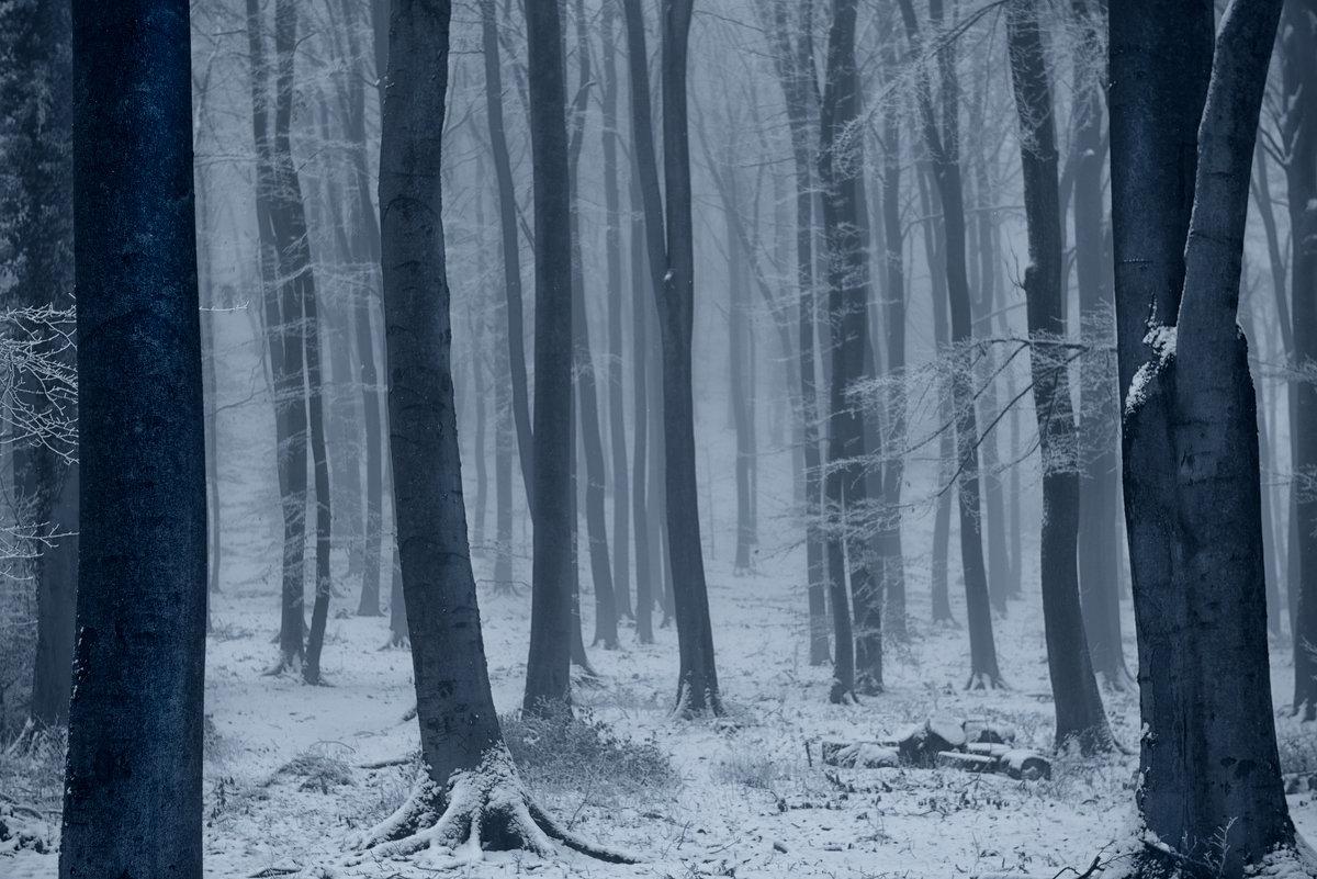 В лесу - Пилот .