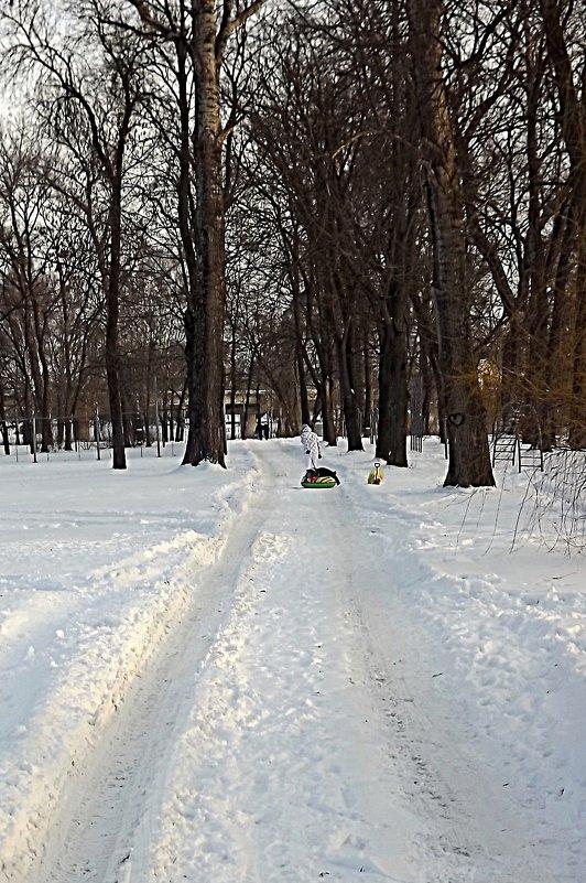 Зимняя Аллея - Андрей Сотников