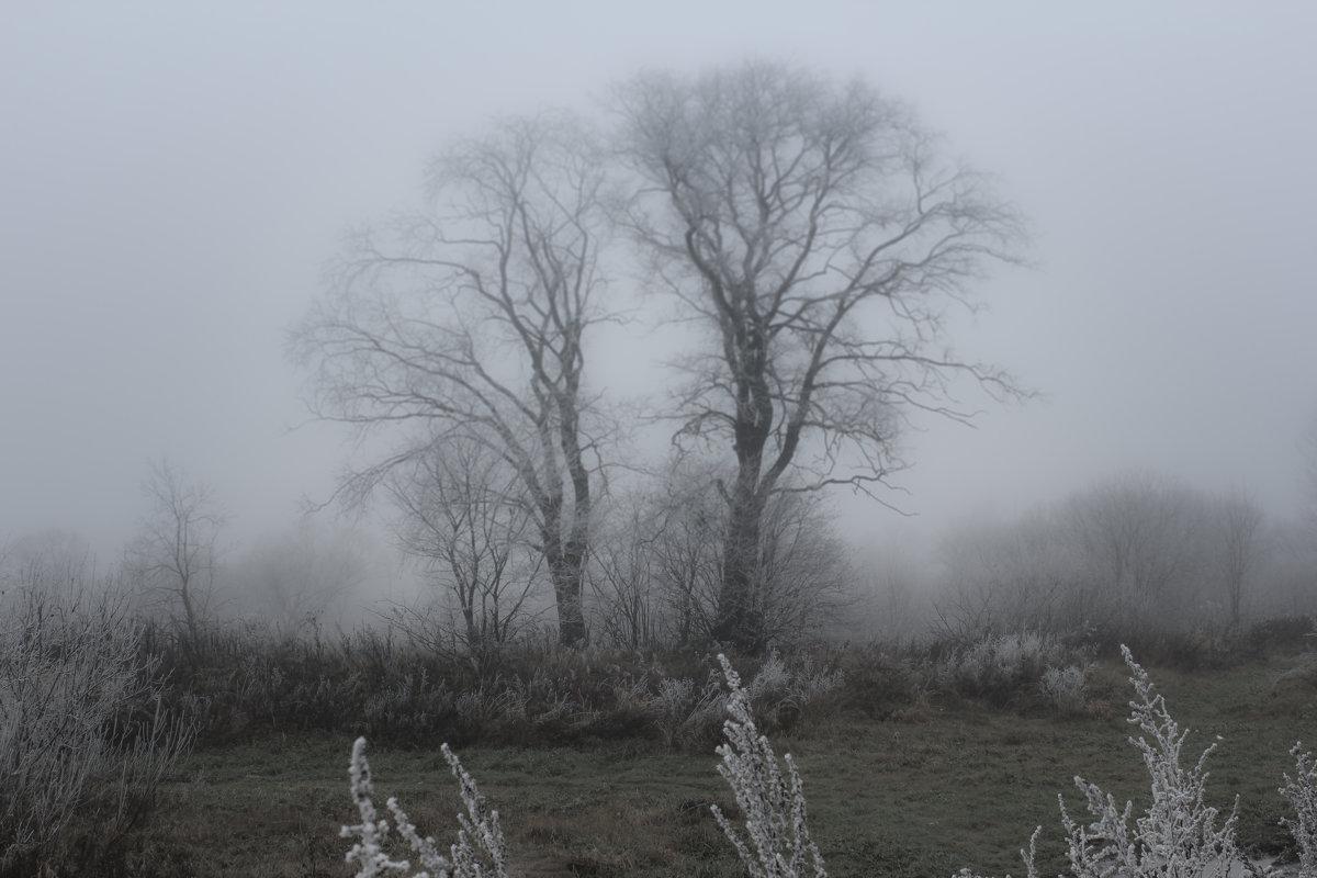 Дерево. - Герман