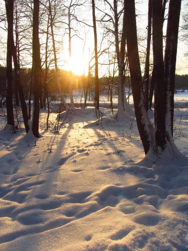 Солнце появилось - жди весну - Андрей Лукьянов