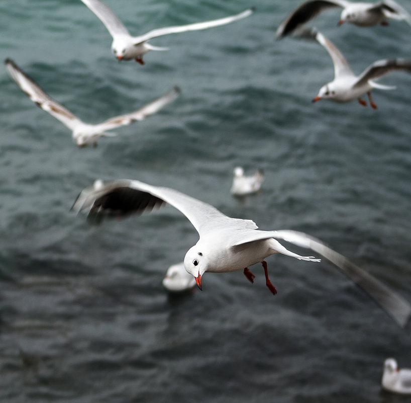 Чёрное море - Ардалион Иволгин