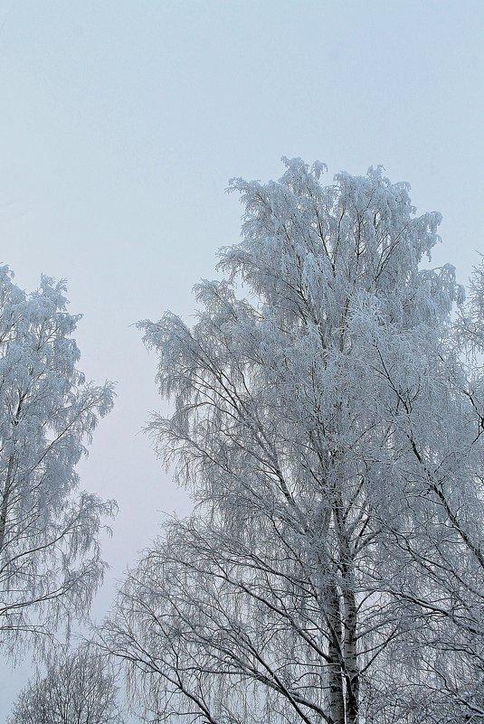 Январское морозное - Михаил Лобов (drakonmick)
