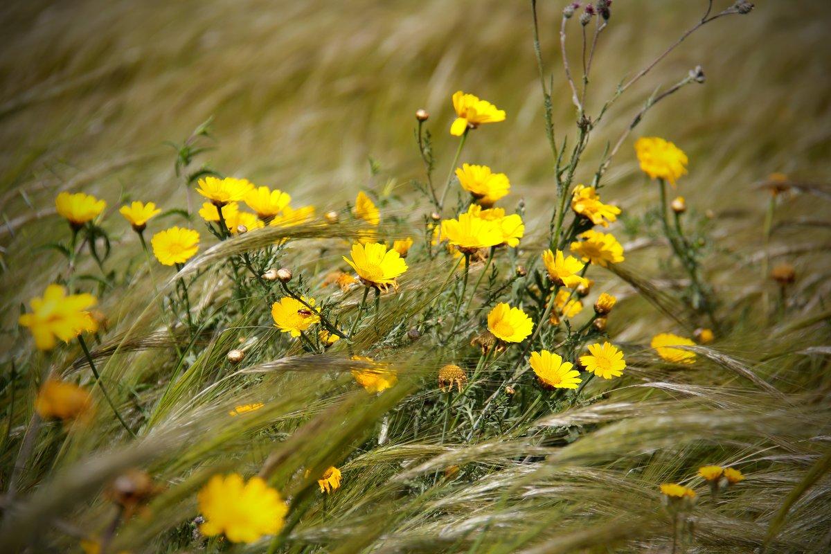 Цветы - Nadiya