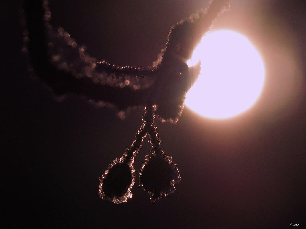 В безмолвной тишине - Swetlana V