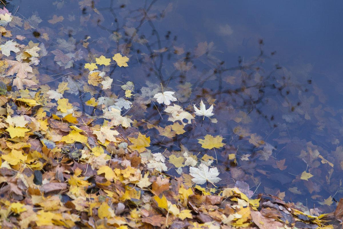 Осенний эпизод - Светлана