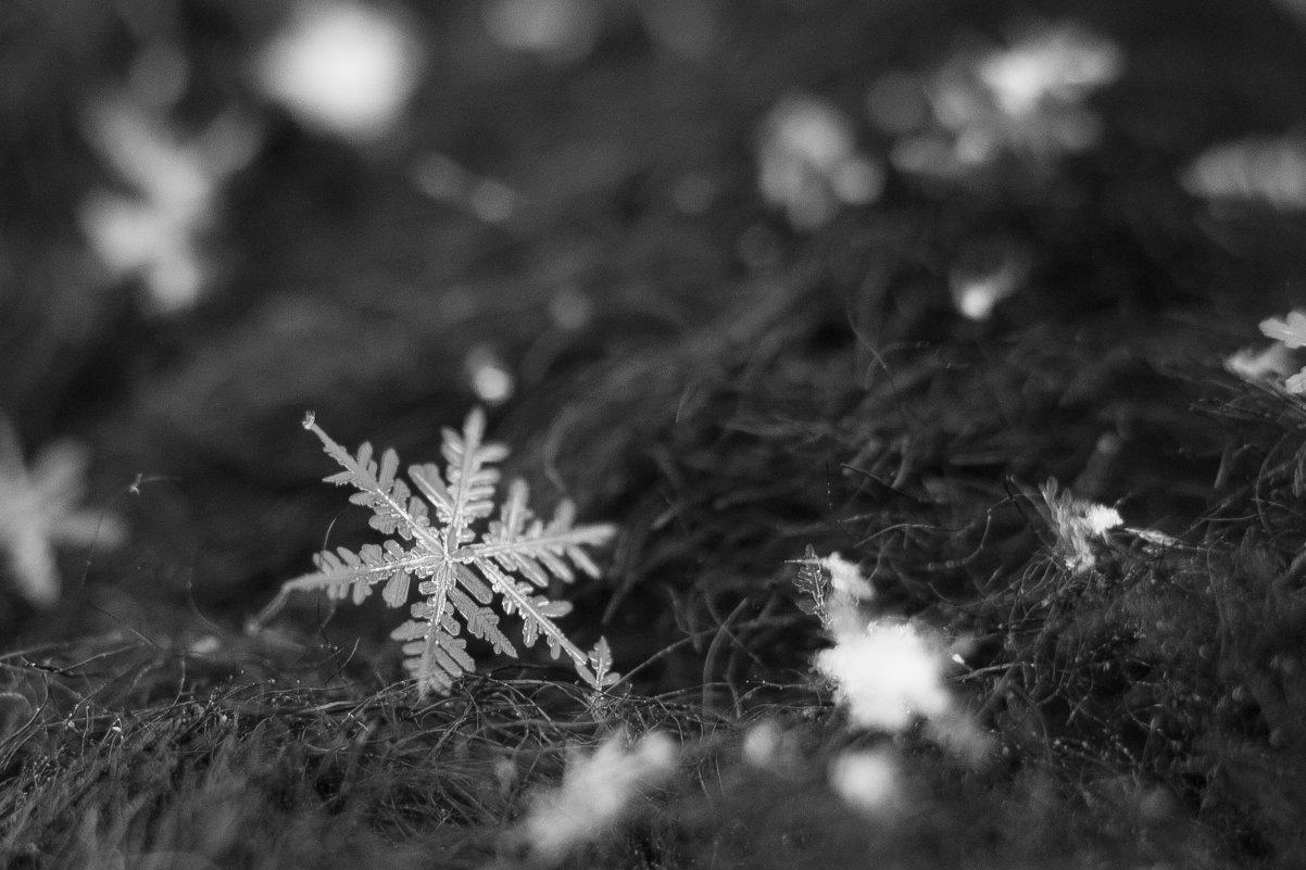 Зимнее творение - Светлана