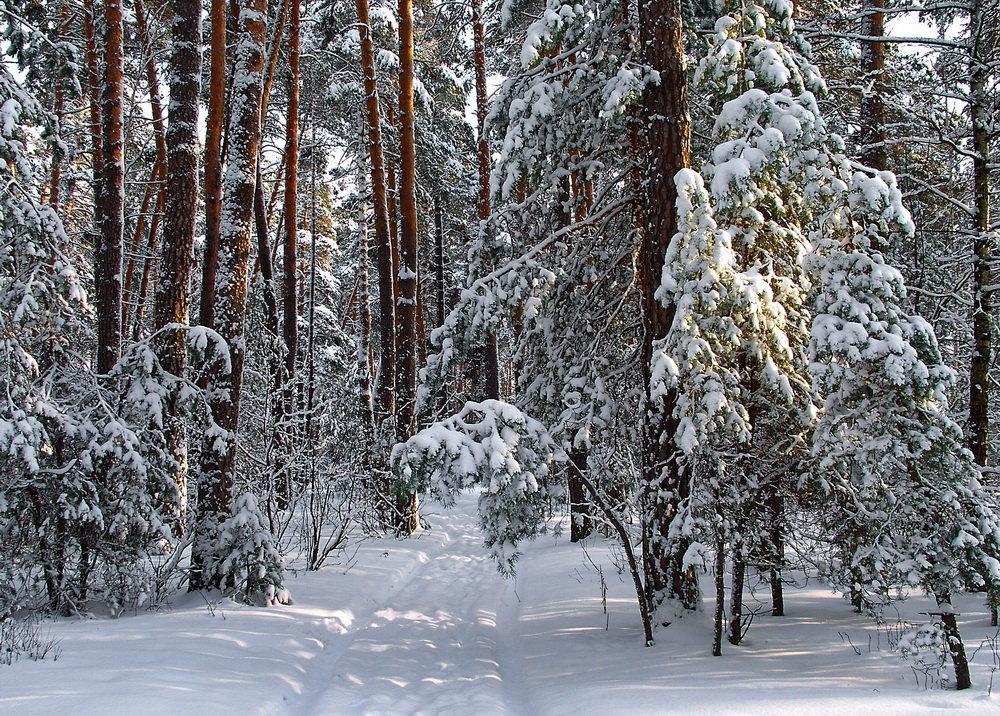 Притих уставший снегопад... - Лесо-Вед (Баранов)