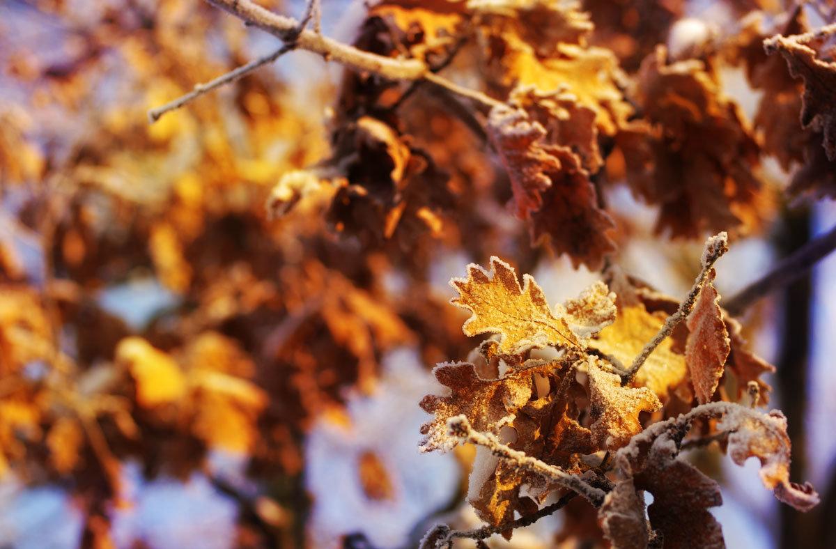 Морозные листья - Белла Витторф