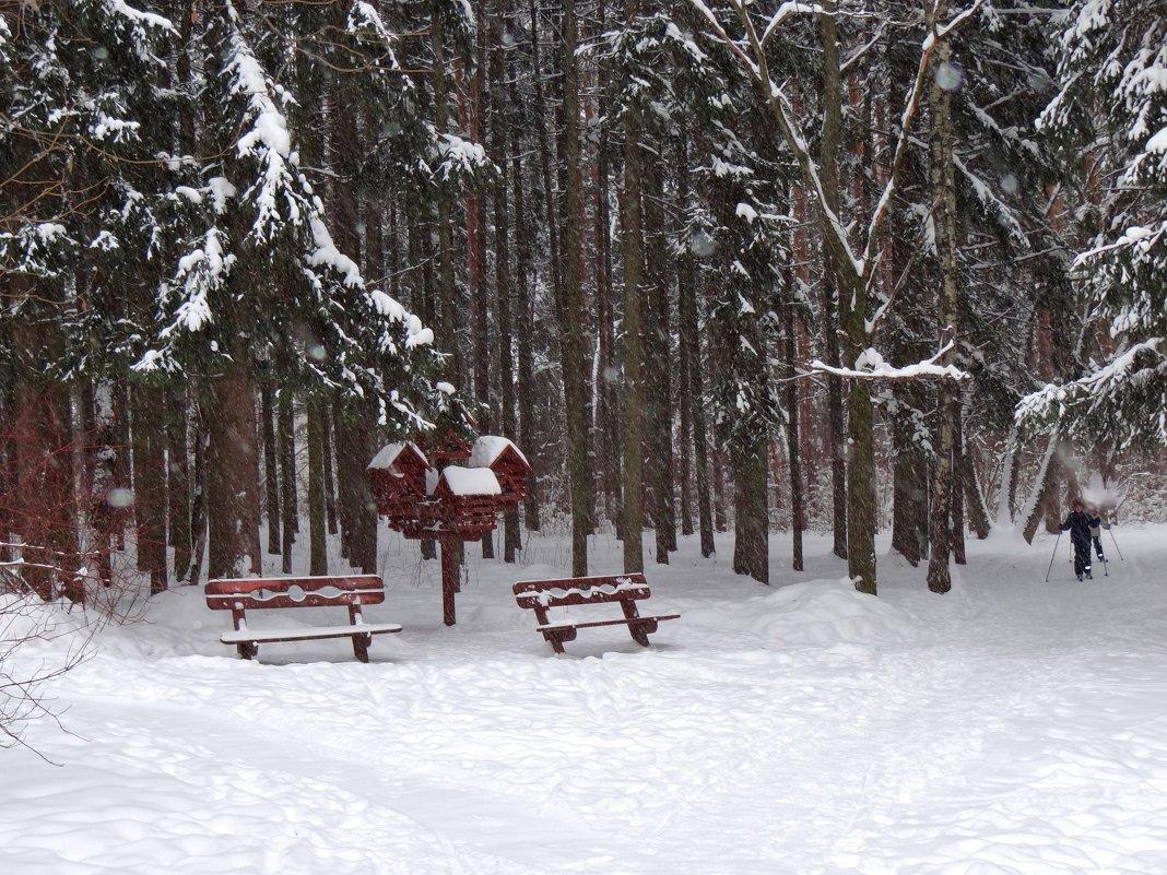 в зимнем лесном парке - Валентина. .