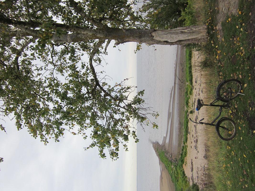 На озере Ильмень - Алина Шевелева