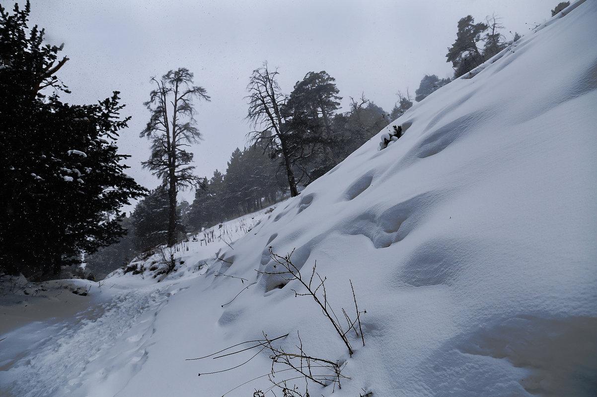 Лес в предгории - Zifa Dimitrieva