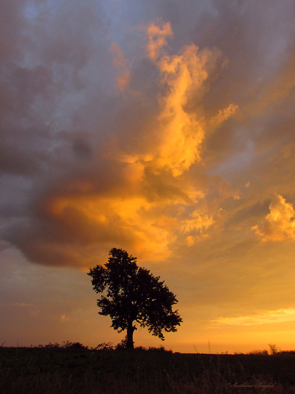 «Sunset/Закат» - Svetlana Baglai