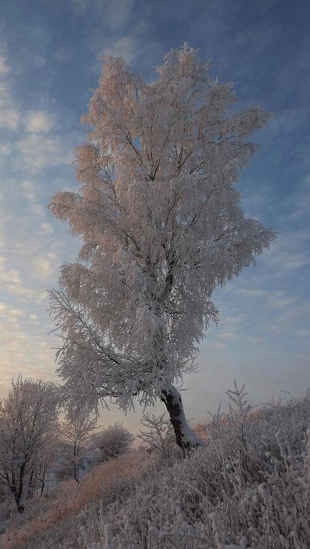 берёзка - svetlana