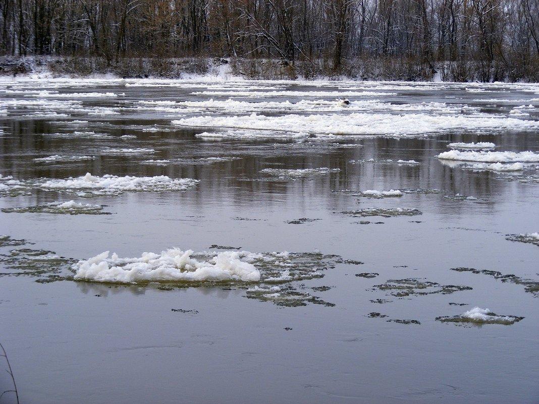 Река Десна - Александр Скамо