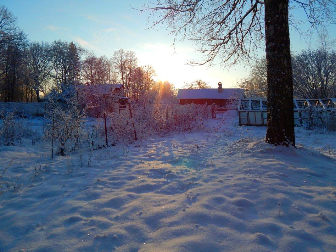 зимний день - linnud