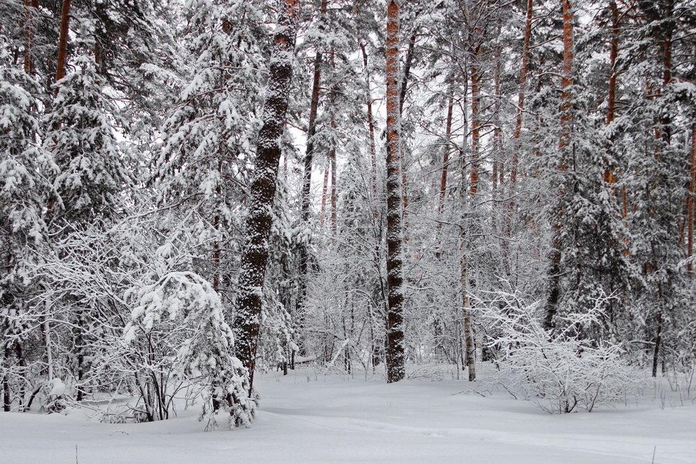 С утра метель и снегопад... - Лесо-Вед (Баранов)