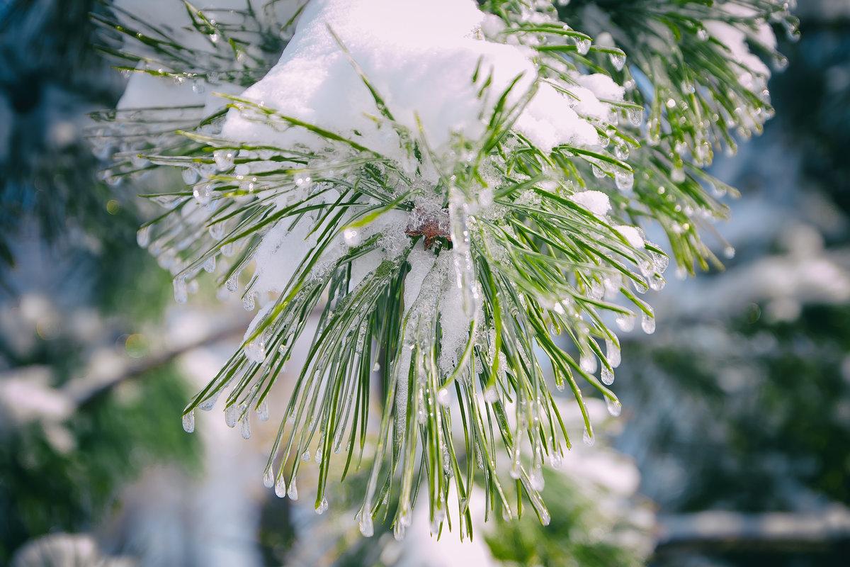 зима краса - олеся