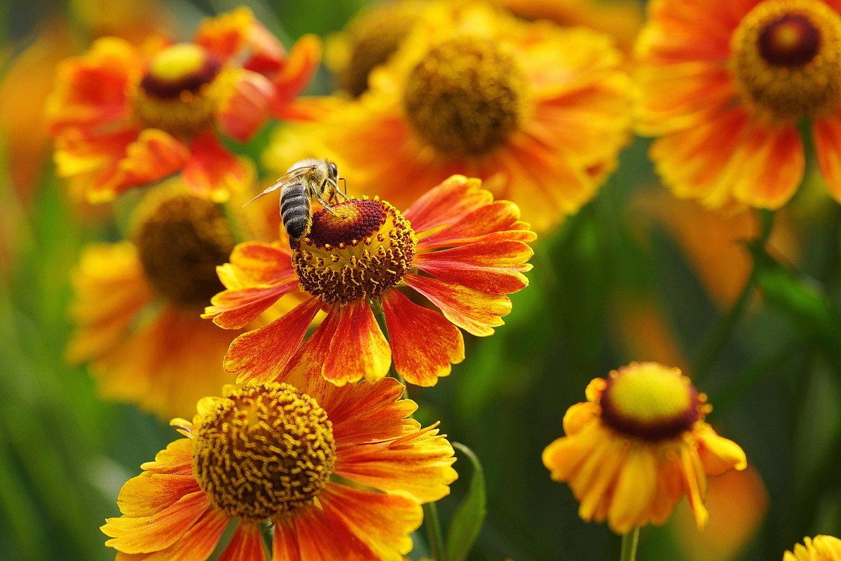 Цветы лета - Юрий Шувалов