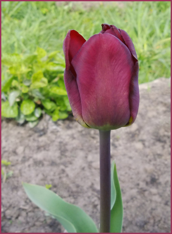 Бордовый - lady v.ekaterina