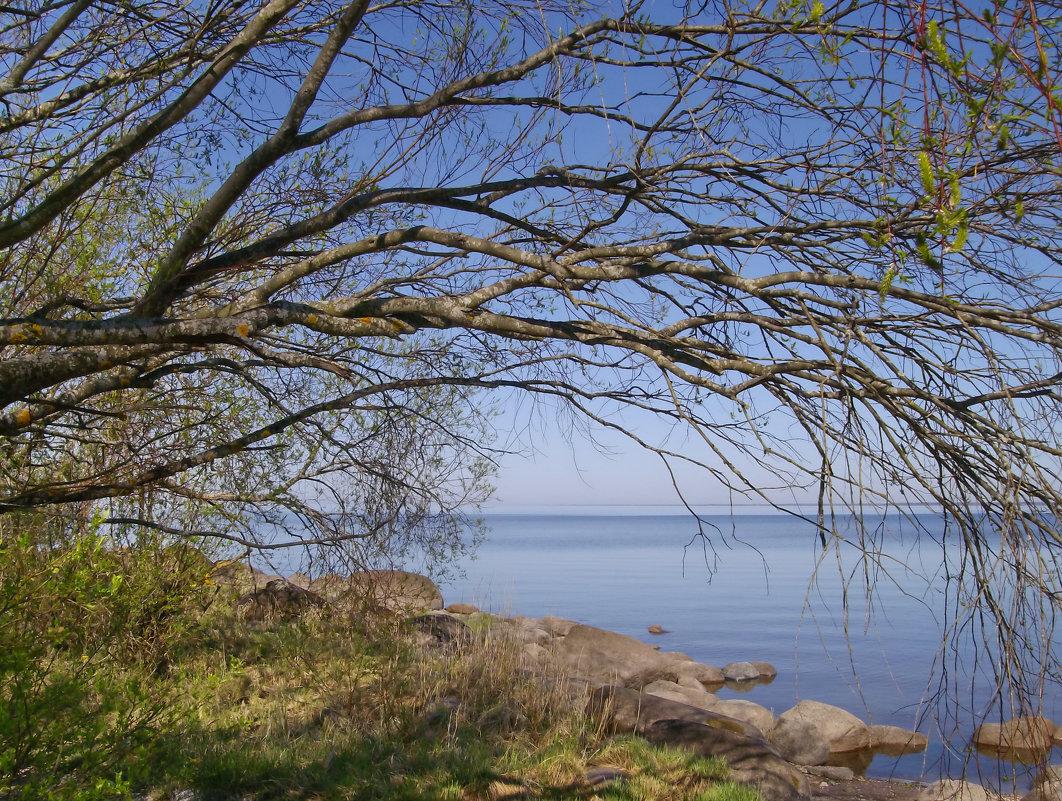 Склонилась ивушка над озером - lady v.ekaterina