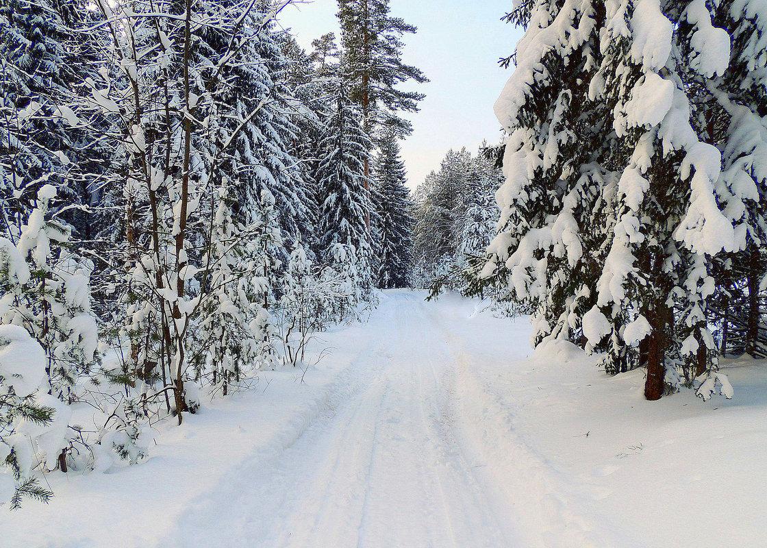 Зимний лес - Павлова Татьяна Павлова