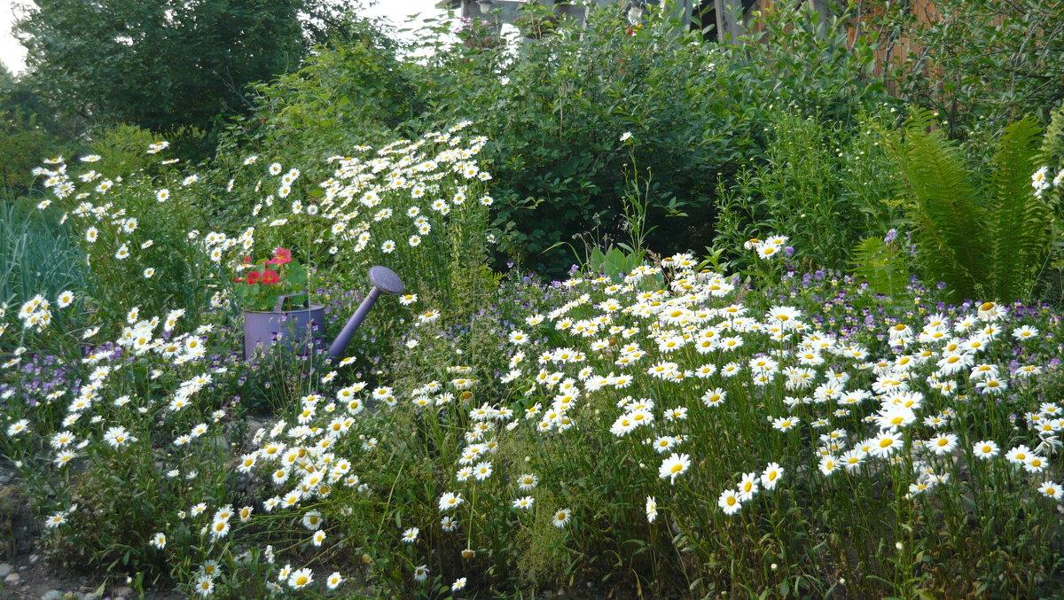 Цветы в саду. - Андрей