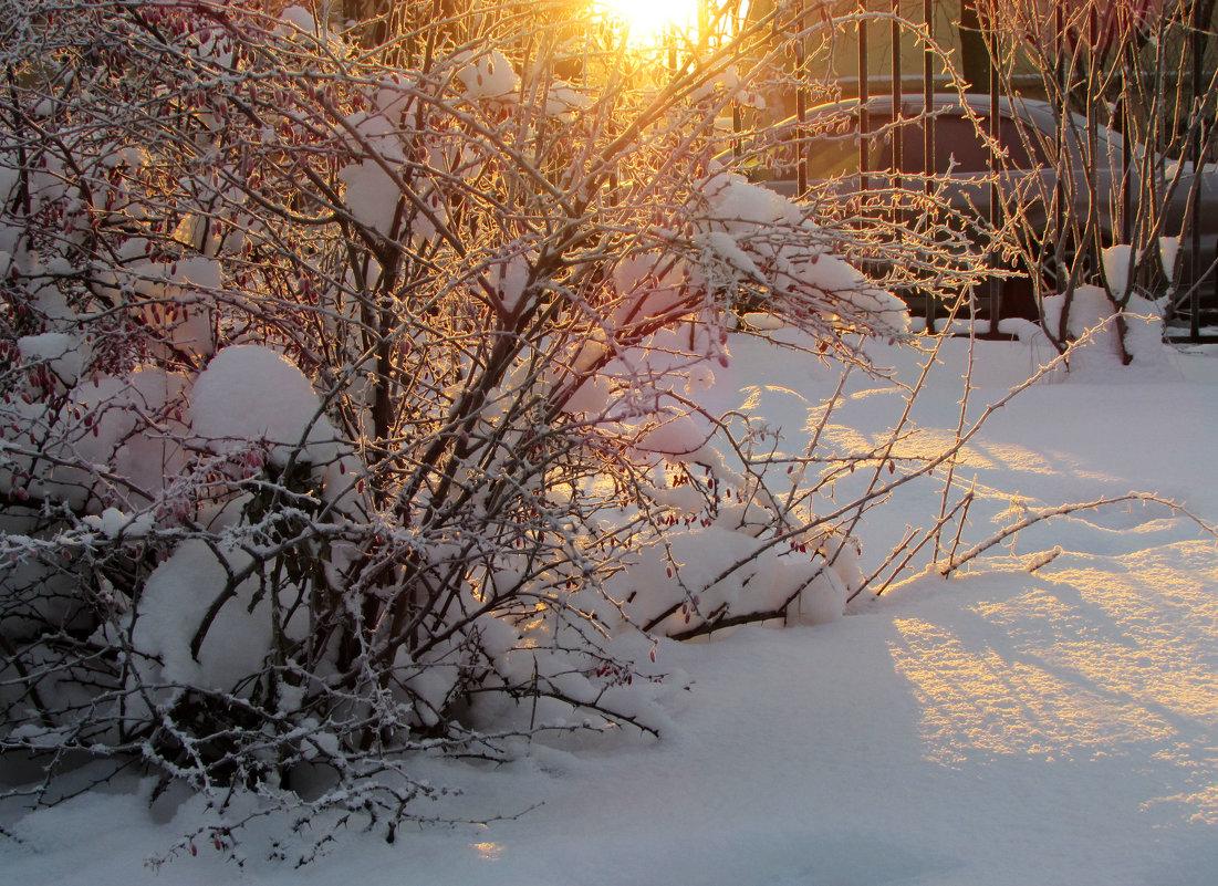 Мороз и солнце!... - Ирина Румянцева