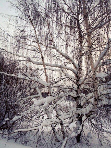 Зима в берёзовых объятьях - Николай Туркин