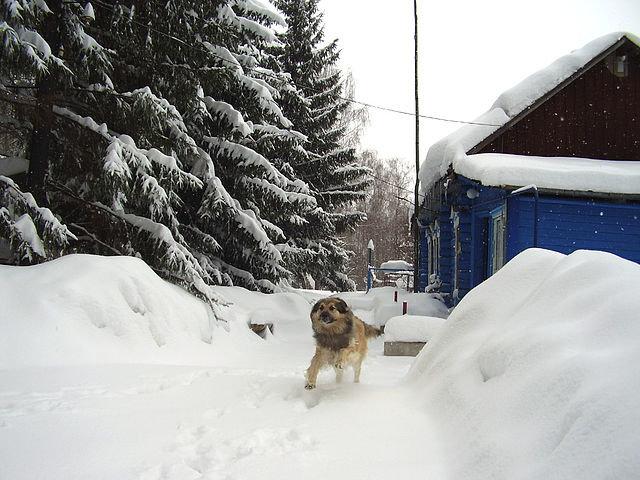 Зима - Нина