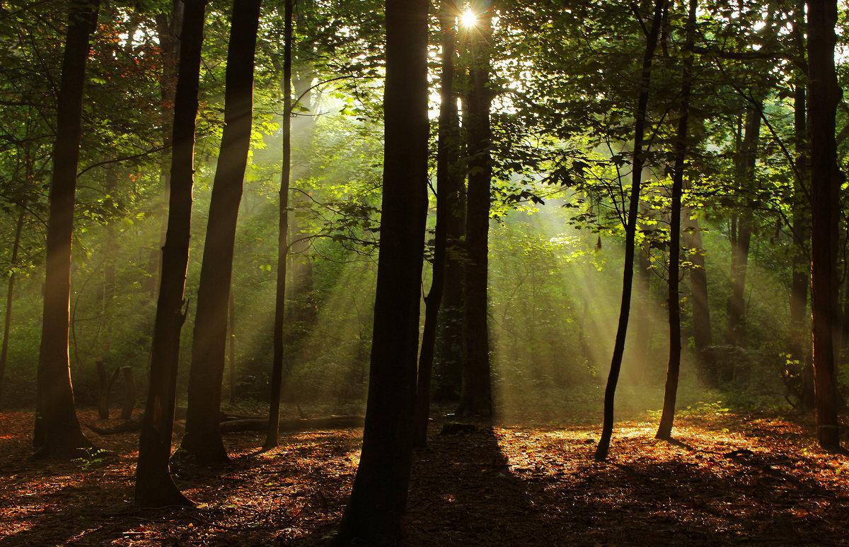 Солнышко в лесу - Alexander Andronik