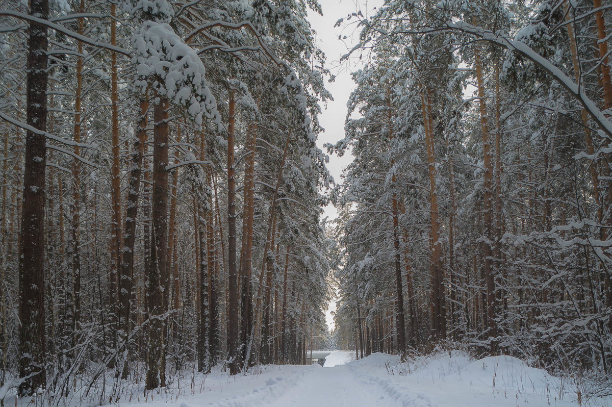 Зимний лес - Александр Шамов
