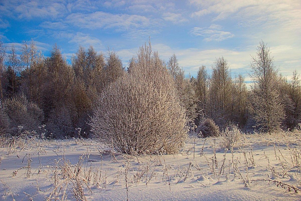 Зима - Бронислав Богачевский