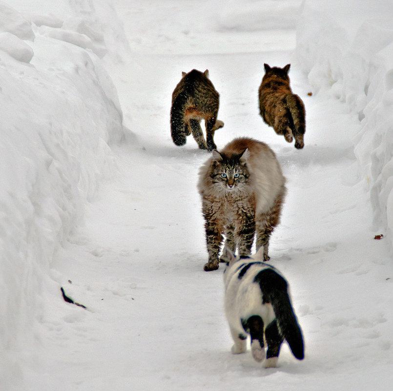 Мачо...!!! - или А мы уйдём на север...))) - Владимир Хиль