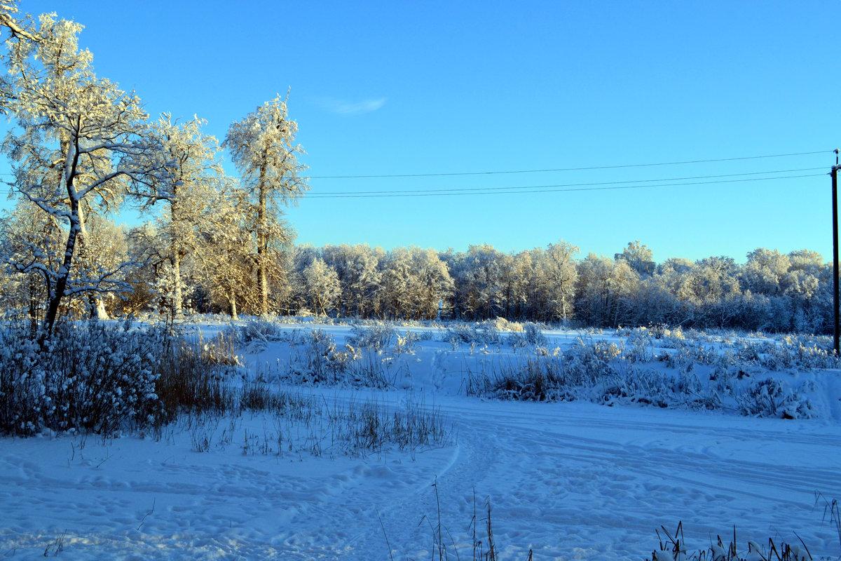 Зимний лес. - Дарья Гречина