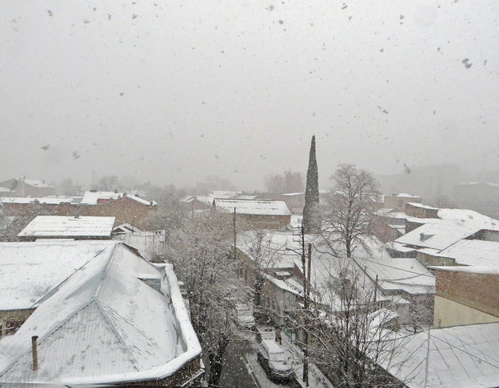В Тбилиси снег - первый - Наталья Джикидзе (Берёзина)