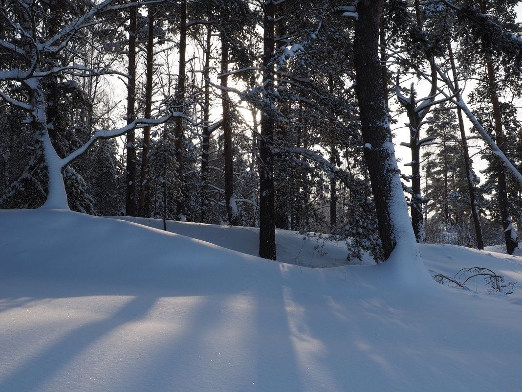 Лес и тени - Андрей Зайцев