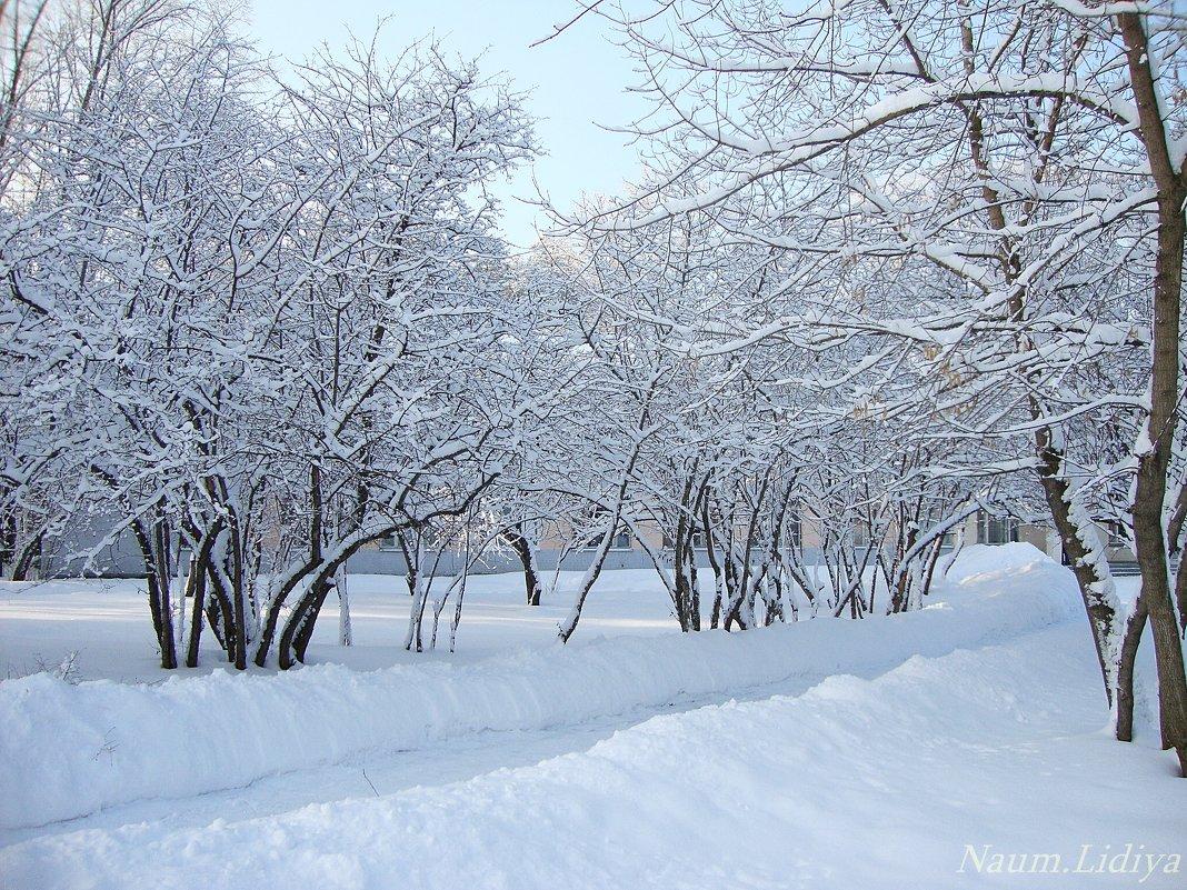 Инеем укрыты деревья - Лидия (naum.lidiya)