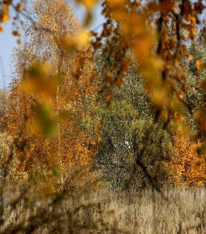 Осеннее... - Валерия  Полещикова