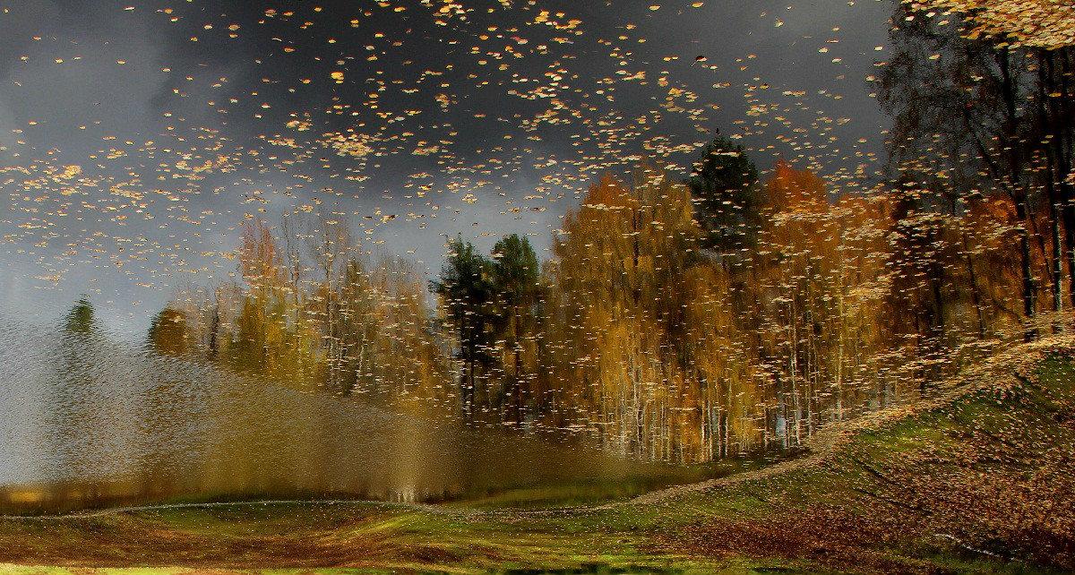 Золотых червонцев листопад. - mike95