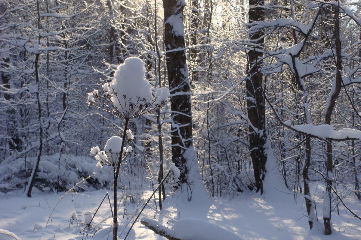 Зимний лес. - Antonina