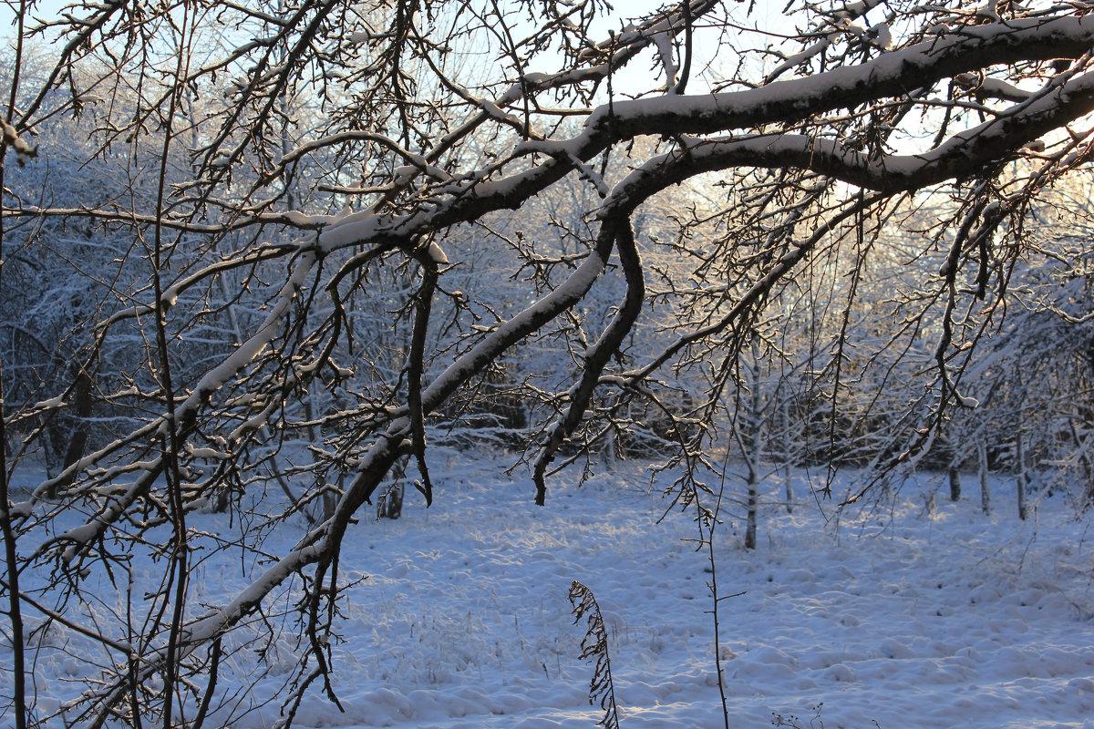 Осыпались яблочки в снег... - Наталья Лунева