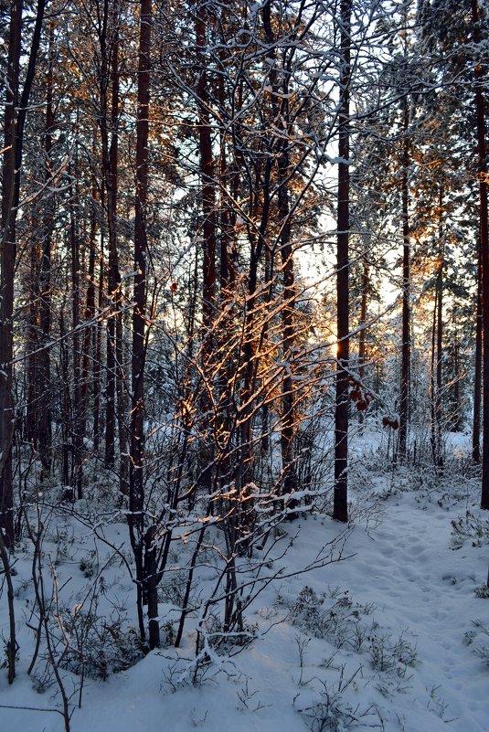 В зимнем сиянии - Ольга
