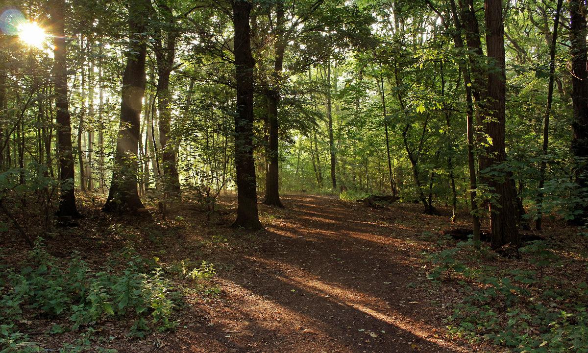 Утро в лесу - Alexander Andronik
