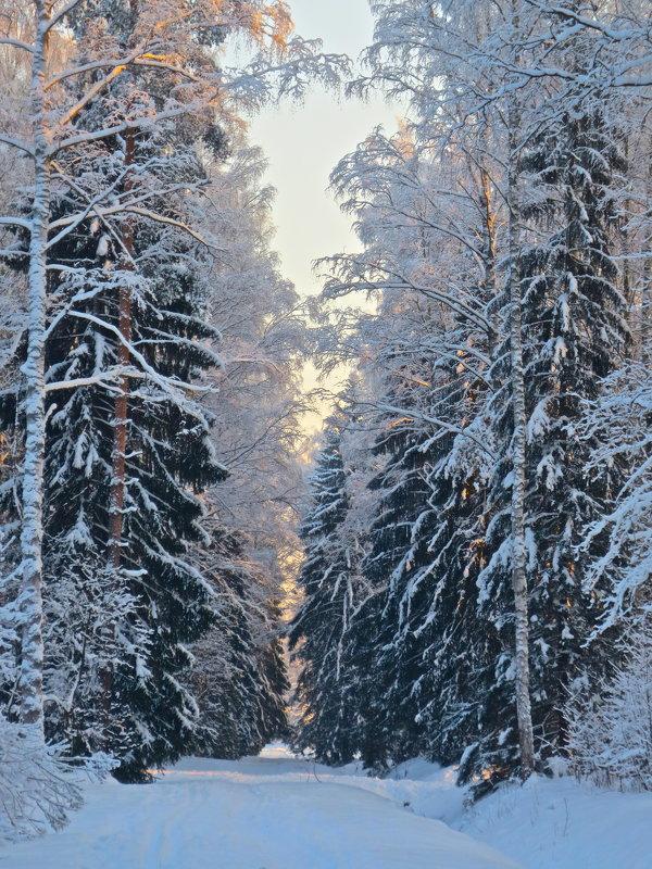 сказки Павловского леса - Елена